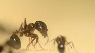 Come sbarazzarsi delle formiche in cinque mosse