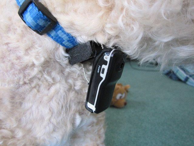 Cinque gadget tecnologici per il tuo cane