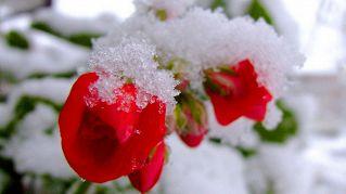 Come proteggersi dal freddo invernale dentro e fuori casa