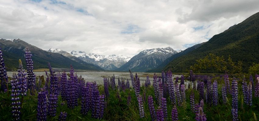 Nuova Zelanda: tutto su come trasferirsi e trovare lavoro