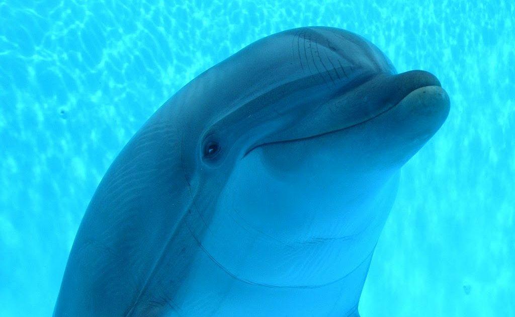 visita all'acquario di genova: prezzi dei biglietti e orari d ... - Acquario Casa Funzionamento E Prezzi