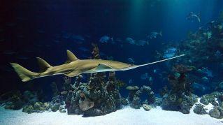 Prezzi, ingressi, orari e parcheggi dell'acquario di Genova