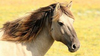 I cavalli riconoscono le emozioni sul nostro volto