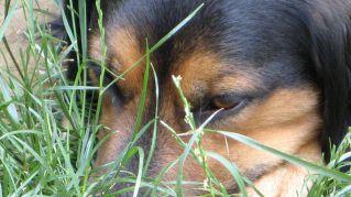 Come scegliere il nome del vostro cane: ispiratevi al suo carattere