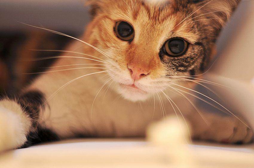 Anche i gatti hanno un oroscopo, ecco le caratteristiche dei vari segni