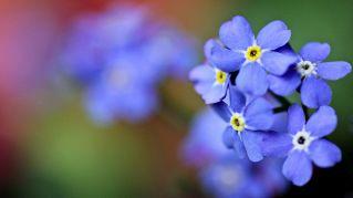 Regalate il fiore giusto e dimostrate il vostro amore
