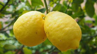 Tutti gli utilizzi di bicarbonato e limone come rimedio naturale