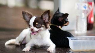 Vita da cani, le stranezze di cani e padroni