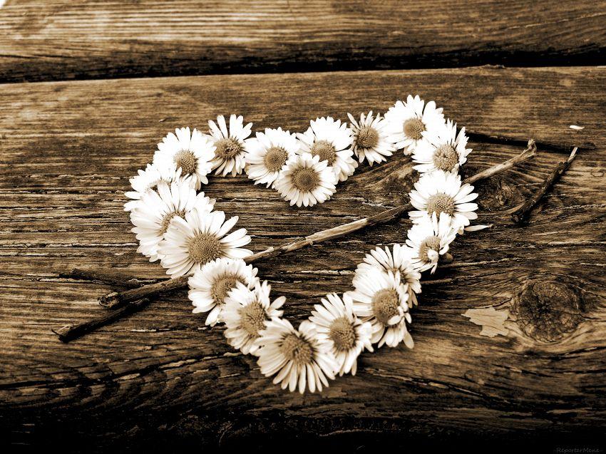 Diecimila fiori per la sua lei: la storia d'amore che giunge dal Giappone