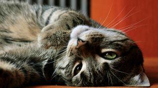 Attenti al gatto: 25 segnali che il tuo animaletto sta male