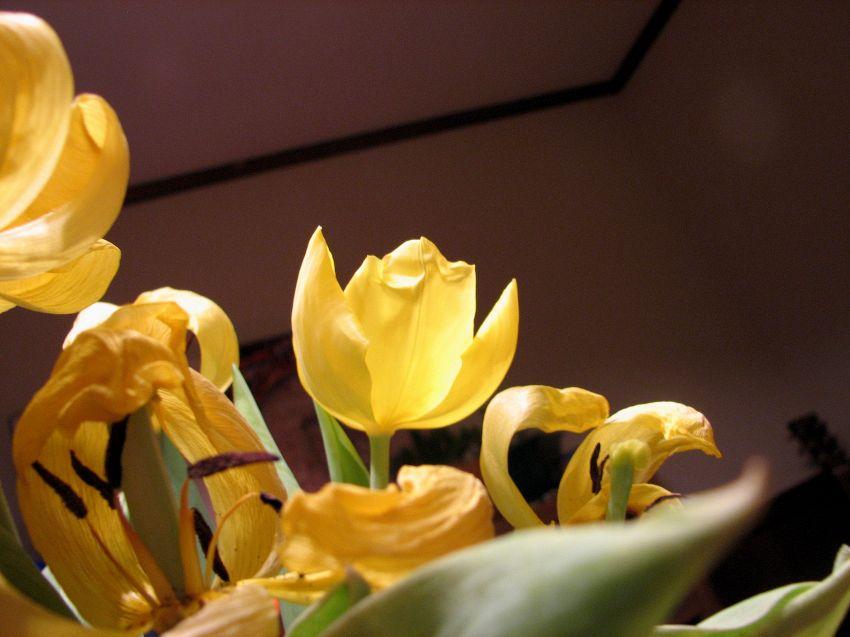 Equinozio di primavera, festa pagana da molti dimenticata
