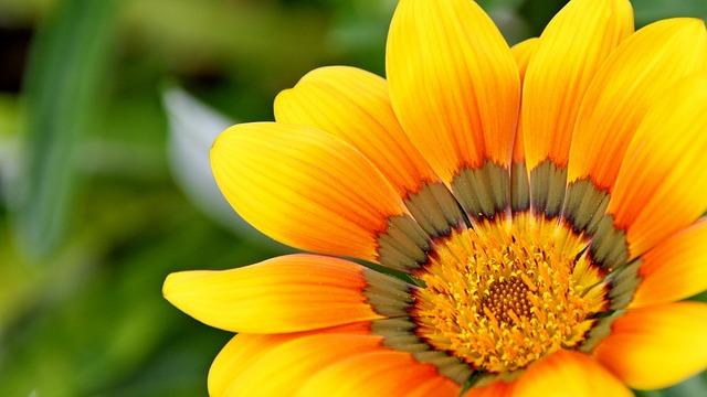 I fiori edibili, cosa sono, quali sono e come si mangiano