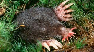 I cinque animali più strani del mondo (la natura scherza)
