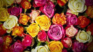 Ditelo con i fiori: il significato dei fiori regalati