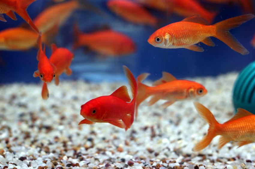 Voglio un acquario! Ecco quanto impegna mantenerlo
