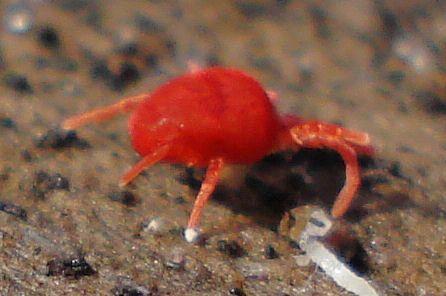Che cosa sono gli acari della polvere e come si combattono