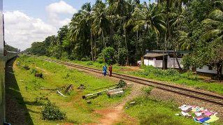 Disoccupazione giovanile: l'India la combatte piantando alberi