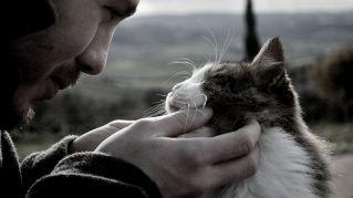 Ecco perché è importante avere un gatto nella propria vita