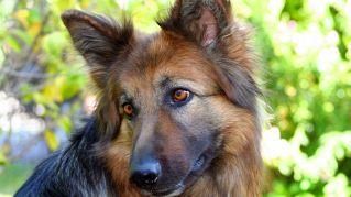 Dignità animale: Lussemburgo è il primo Paese europeo a parlarne