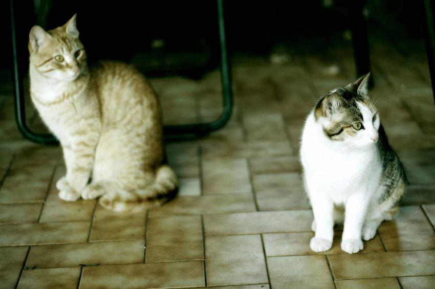 Gatti in casa, trucchi e consigli per farli sentire a loro agio