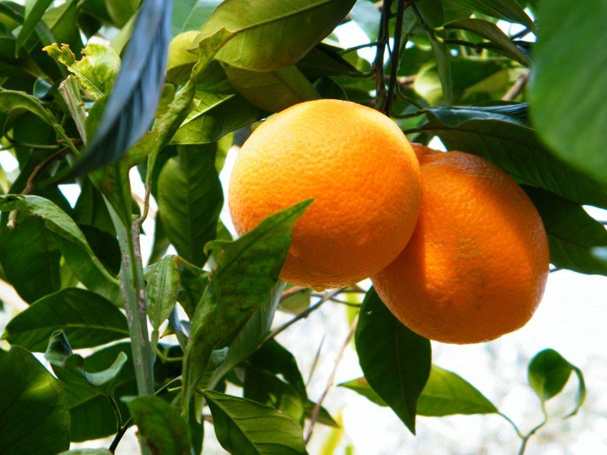 Garibaldi: quali sono gli ingredienti di base e come si prepara