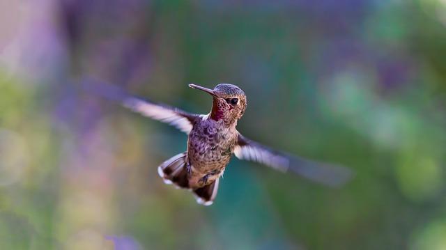 5 uccelli incantevoli: dal pavone al martin pescatore