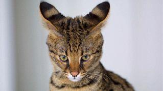 5 animali esotici: quali sono e dove osservarli
