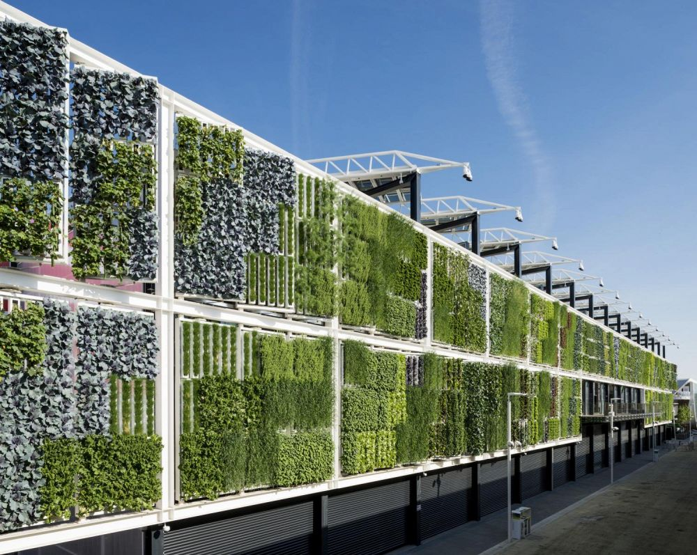 giardini verticali idee per realizzarli e quali piante