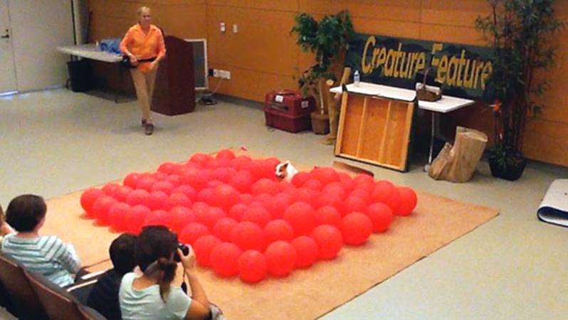 Il cane più veloce: 100 palloncini esplosi in pochi secondi. E' record!