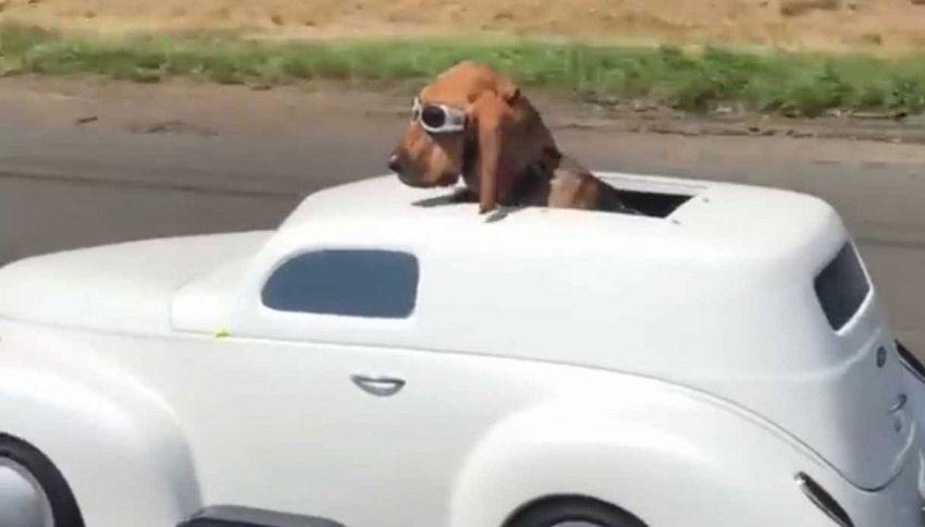 Questo cane ha la sua auto, è figo ed è amato più di ogni altra cosa