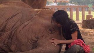 Il tenero elefante si addormenta solo con la ninna nanna