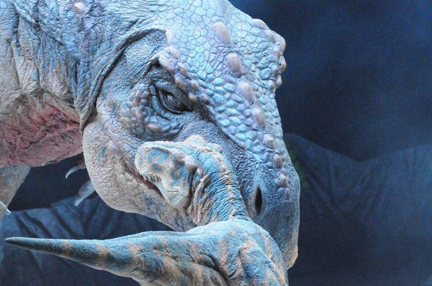 Dubbi sulla sparizione dei dinosauri, non è stato un asteroide