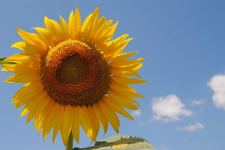 Scegli un fiore e ti dirò chi sei: la personalità floreale