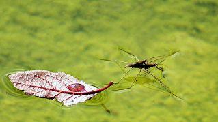 Rimedi contro zanzare e pappataci, da quelli estremi ai naturali
