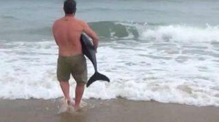 Guida turistica salva e restituisce al mare un piccolo delfino