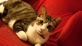 Gatti e vini d'annata, il cat bar americano va per la maggiore