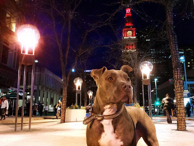 Il cane Palla commuove tutti, su Facebook oltre 400 mila Like