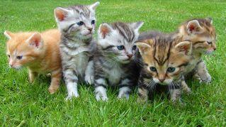 Guardare video di gattini aumenta il buonumore. Lo dice la scienza