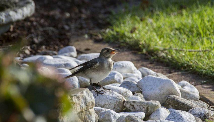 Perché in Cina gli uccellini chiedono l'elemosina