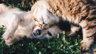 Cuccioli alla riscossa, le più belle foto in video