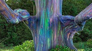 L'albero arcobaleno esiste davvero, senza usare Photoshop