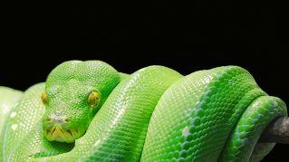 I serpenti più strani al mondo: caratteristiche e stranezze
