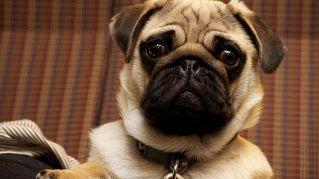 Classifica: 10 razze di cani più strani conosciute e sconosciute