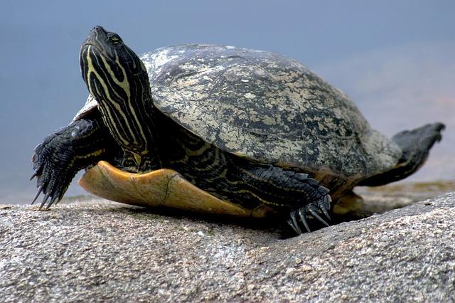 Alla scoperta delle tartarughe strane