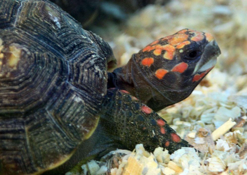 Tartaruga stanca supereva for Tartaruga acquatica letargo