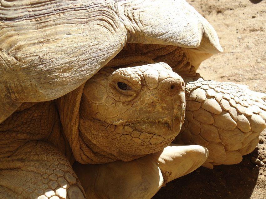 Quali sono le tartarughe più strane in assoluto al mondo?