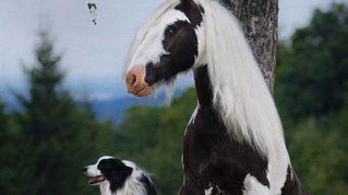 Gli animali nati da due madri diverse: ecco le spettacolari immagini