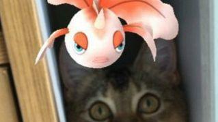 I gatti possono vedere i Pokemon? Pare proprio di sì