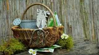 Giardinaggio: come migliorare il proprio pollice verde