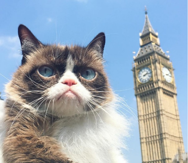 Grumpy Cat, 1,6 milioni di follower seguono le sue vacanze a Londra